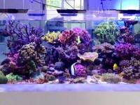 Reefroom studio Beograd (3) - Copy